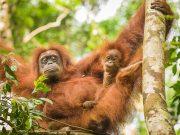 20080604-P6041982-Sumatra2008