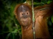 20080604-P6042082-Sumatra2008