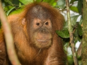 20080604-P6042098-Sumatra2008